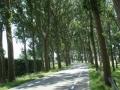 piershil-sluisjesdijk-nasteeg-3aug2007-56