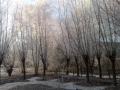 piershil-heemtuin-9jan2009-06