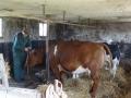 piershil-voorstraat45-30april2012-18