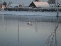 piershil-winter-10feb2013-08