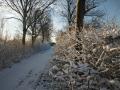 piershil-winter-10feb2013-32